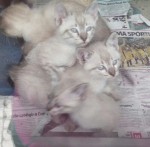 gatinhos-brancos